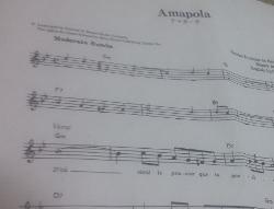 Amapola4